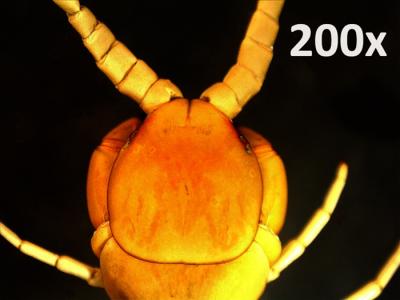 Celestron mikroskop digitální 5 Mpx zvětšení 20 až 200x